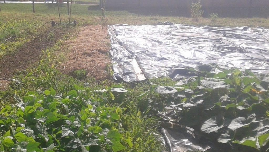 Quel carton pour la permaculture ?