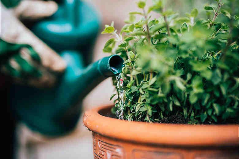 À quelle fréquence arroser le jardin?