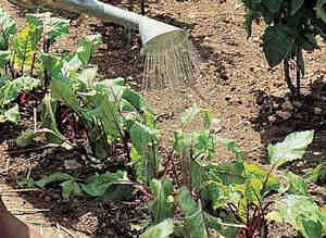 À quelle fréquence arroser votre jardin?