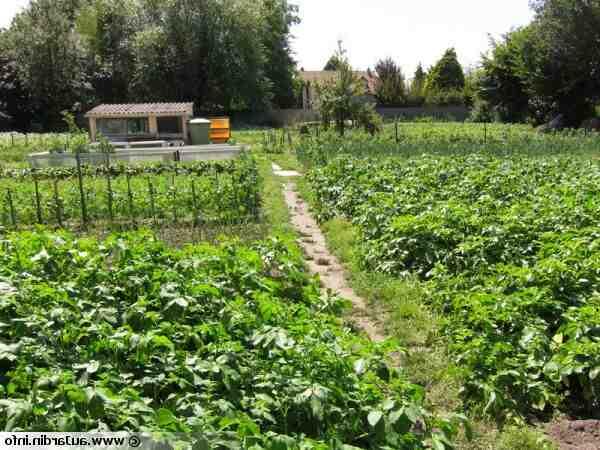 À quelle fréquence arrosez-vous le jardin?