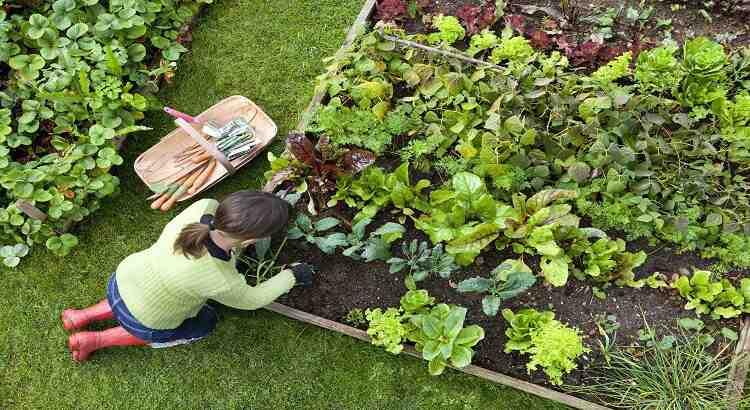 Comment avoir un bon jardin?