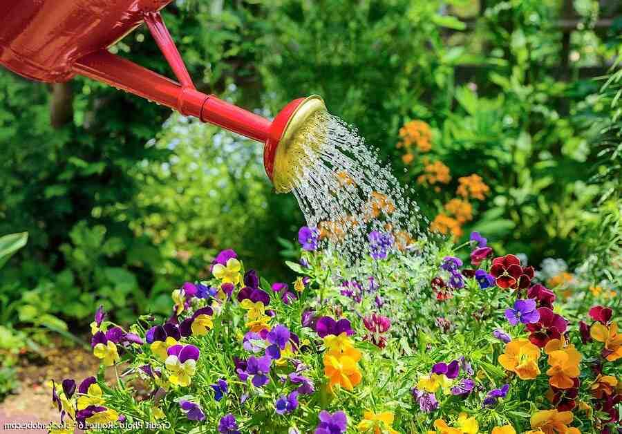 Quand arroser votre jardin le matin ou le soir?