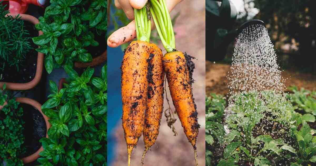 Quel est le meilleur arrosage pour un jardin?