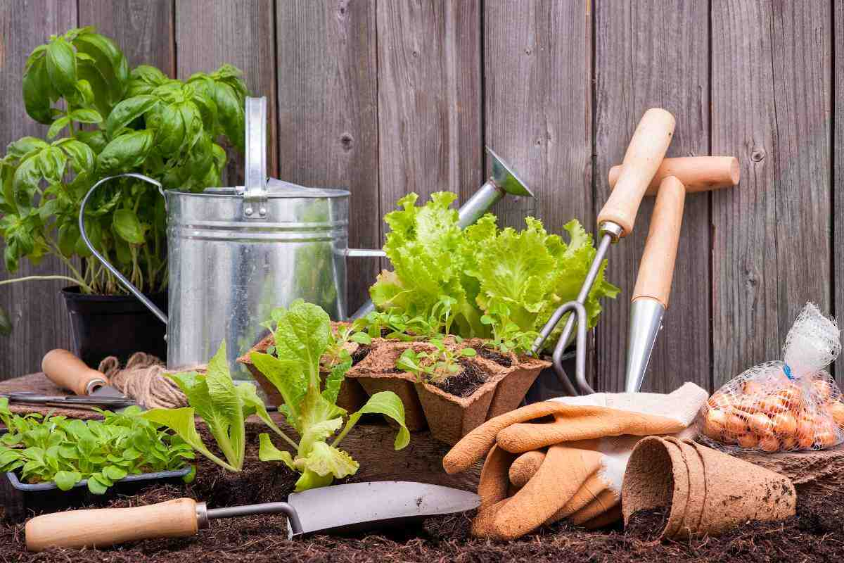 Quel légume devrait démarrer un potager?