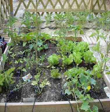 Quelle est la meilleure irrigation pour un potager?